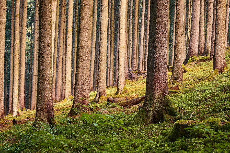 Hiilinielukeskustelussa ei nähdä metsää puilta